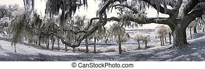 180 degree panorama of live oak tree and south carolina coast