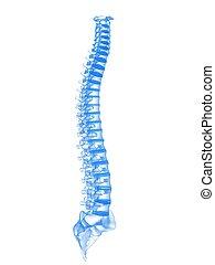 3d rendered illustration of human spine