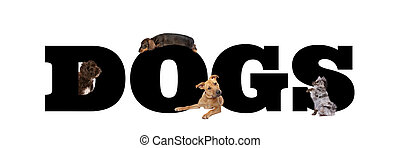 A group of four dogs around black letters
