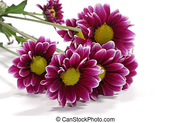 A Photo of Vivid Flowers