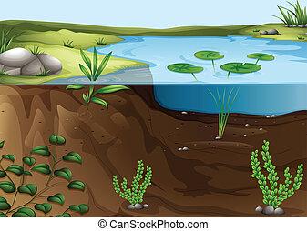 Illustration of a pond ecosystem