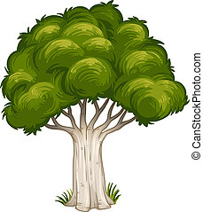 Illustration of a shade of a big tree on a white background