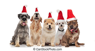 adorable group of five santa dogs of different breeds