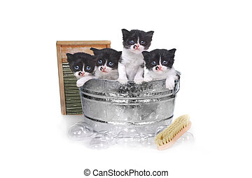 Kittens Taking a Bath in a Washtub With Brush and Bubbles