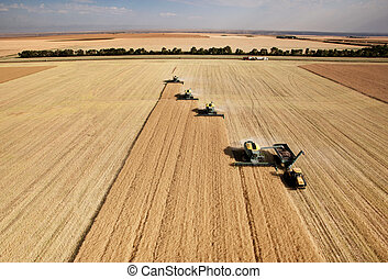 Four harvesters combing on a prairie landscape in formation