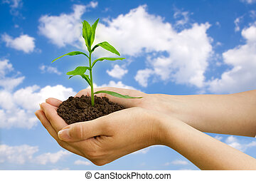 agriculture. plant in a hand over blue sky