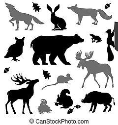Animals living in european forest.