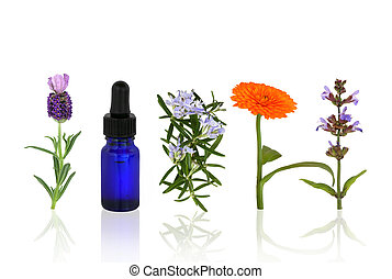 Lavender, rosemary, marigold and sage herbs in flower with an aromatherapy essential oil blue glass dropper bottle in a line, over white background with reflection.