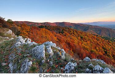 Autumn forest mountain panorama