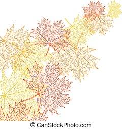 Autumn macro leaf of maple. Vector bacground.
