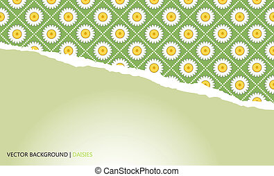 background with torn paper and camomiles