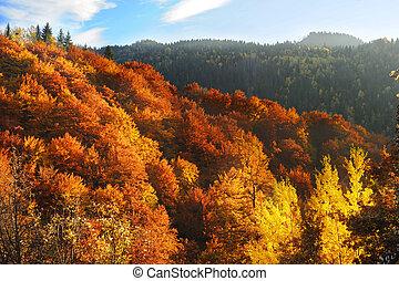 Beautiful autumn mountains
