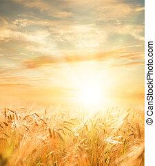 Beautiful sunset over wheat field.