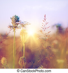 Beauty wild flowers on the meadow, environmental backgrounds