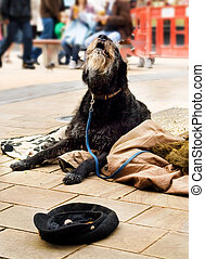 A dog begging in the street laying on a blanket.