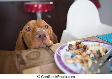Begging dog in kitchen asking for food
