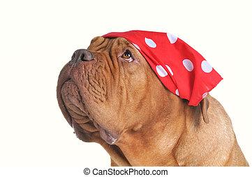 Begging dog with red bandana of polka-dot design