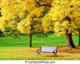 Bench and maple in city park in autumn