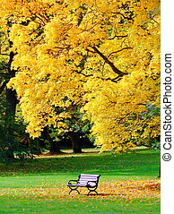 Bench and oak in city park in autumn