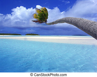 Bending Palm Lagoon