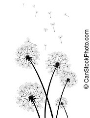 black and white dandelions vector