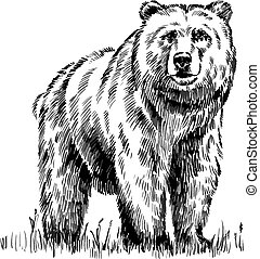 black and white engrave isolated vector bear