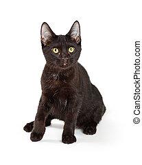 Black Kitten Sitting on White
