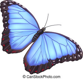 illustration of a beautiful blue morpho butterfly