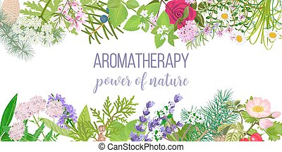 Card with essential oil plants. Frame Ornament with text aromatherapy. Power of nature