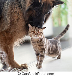 Cat and dog together indoors