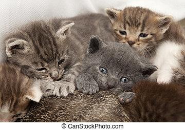 cat babies
