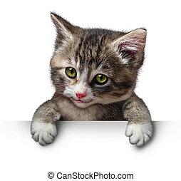 Cat Kitten Blank Sign