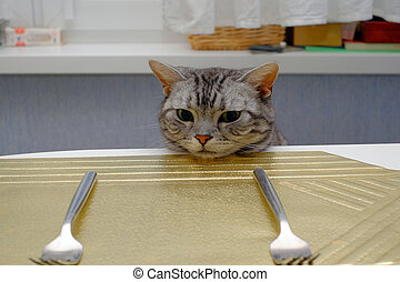Cat waiting for food