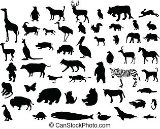 Collection of animal