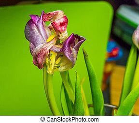Colorful Flower Closeup 2