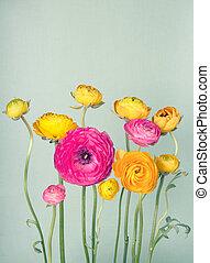Colorful ranunculus flower on vintage background