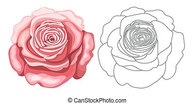 Coloring page with rose