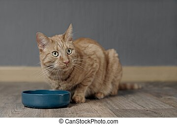 Cute ginger cat waiting for food at home