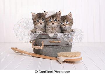 Cute Kittens in Washtub Getting Groomed By Bubble Bath