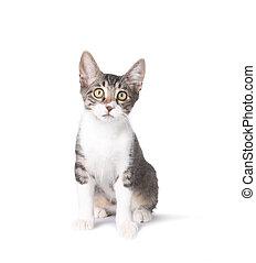 Cute Sitting Kitten on White