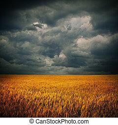 Dark clouds over wheat field