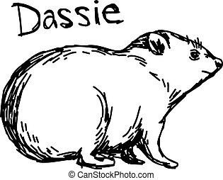 Dassie - vector illustration sketch hand drawn with black lines, isolated on white background