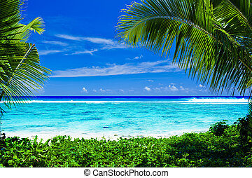 Deserted tropical beach framed by palm trees