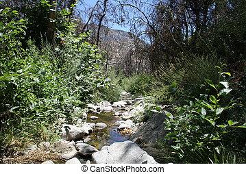 Devil's Canyon Stream