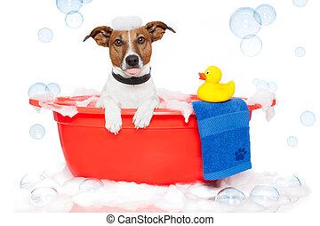 Dog taking a bath in a colorful bathtub with a plastic duck