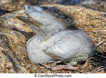 dying young bird due to drought