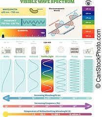 Electromagnetic Waves: Visible Wave Spectrum. Vector illustration diagram with wavelength, frequency, harmfulness and wave structure.