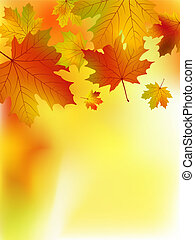 Fall yellow maple leaves.