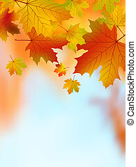 Fall yellow maple leaves. EPS 8