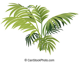 Fern plant - colored illustration, Vector